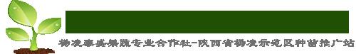 杨凌种苗育苗中心|陕西省杨凌示范区种苗定点推广站|杨凌泰盛合作社