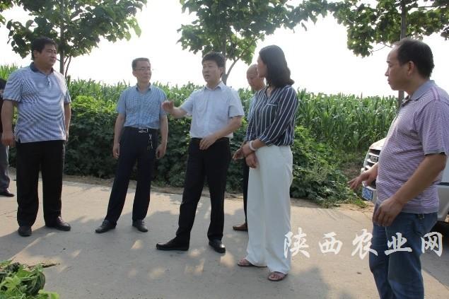 积极应对突发虫情,及时开展应急防治-陕西农业网