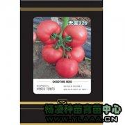 天宝326番茄种苗