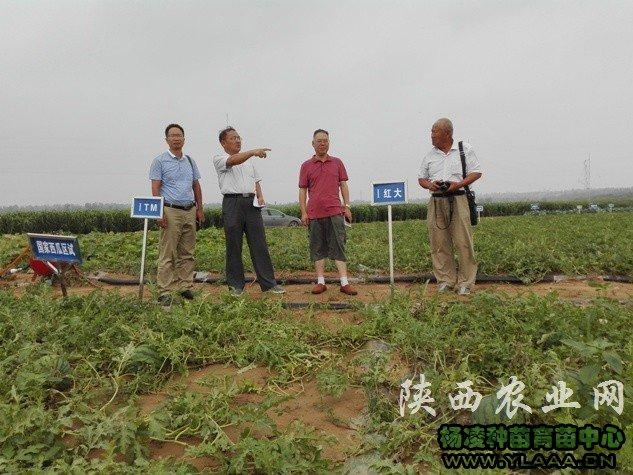 陕西省西甜瓜产业技术体系专家组在榆林调研沙