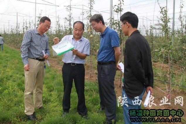 省农业厅检查苹果病虫害绿色防控技术情况