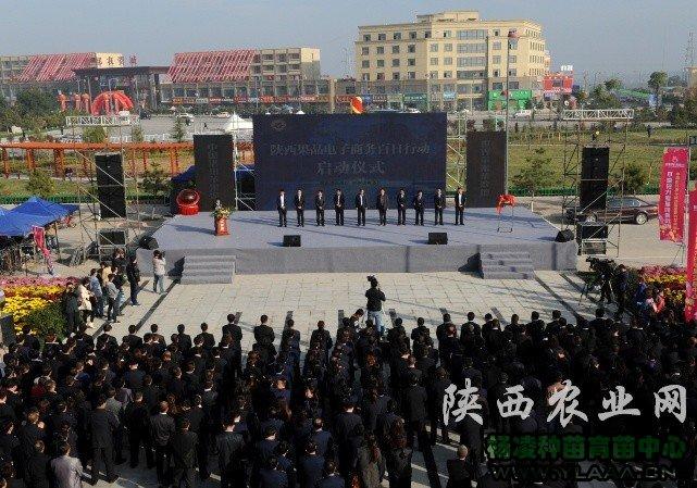"""陕西果品电子商务""""百日行动""""在洛川县启动"""