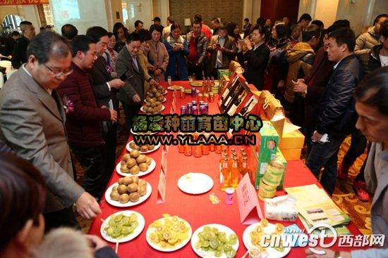 周至猕猴桃进军华东市场 嘉兴推介会签下1.54万吨